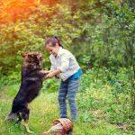 Guide pour aider votre enfant à dresser son chien